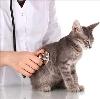 Ветеринарные клиники в Текстильщике